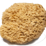 Large Sponge-2×2